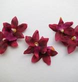 Weinrote Miniorchideen Haarblüten