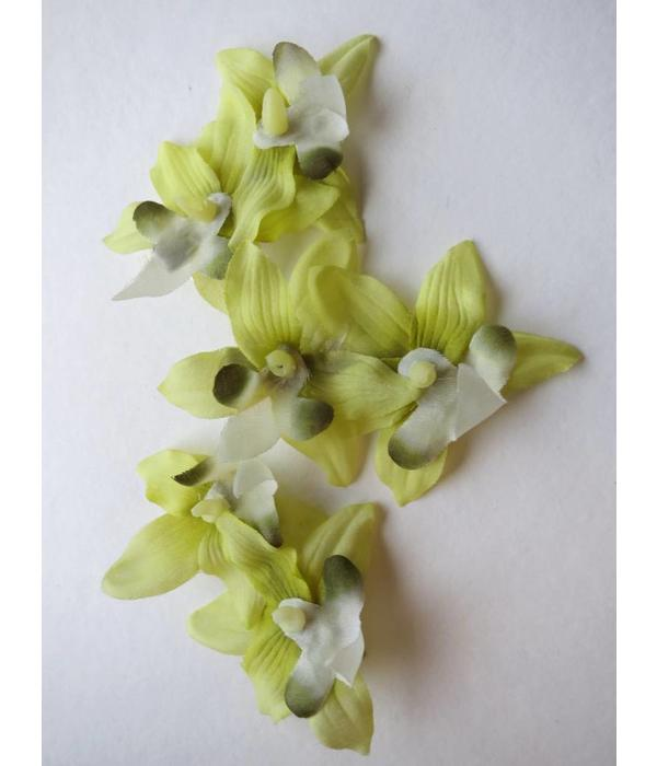 Hellgrüne Miniorchideen Haarblüten