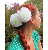 Haarblüte Weiße Chrysantheme 2 x