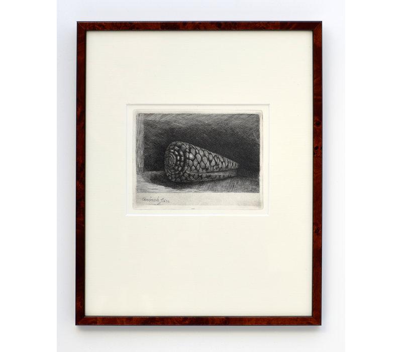 ETS De Schelp Conus Marmoreus in Lijst