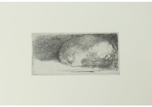 Postcard Sleeping Puppy