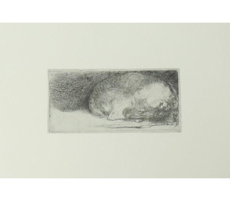 Postcard Sleeping Puppy