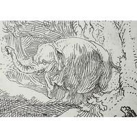 Postcard Elephant Etching