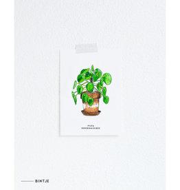 Meesie & Bintje Kaart Pannenkoekplant