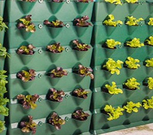 Verticale Groene Wand Modules