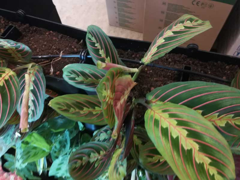 Minigarden groene wand irrigatie