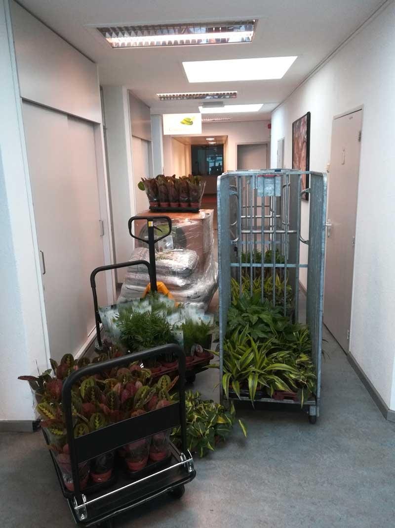 Modules en planten komen binnen
