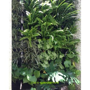 Minigarden Vertical en Corner 1m2 combinatie pakket