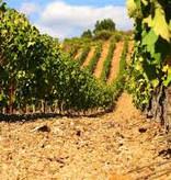 Cave de Roquebrun Golden Vines 2012