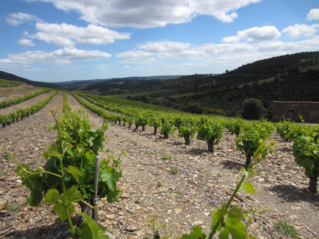 Mijn favoriete Languedoc-wijn per druivensoort