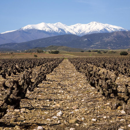 Vignerons Catalans Haute Coutume Collioure 2016