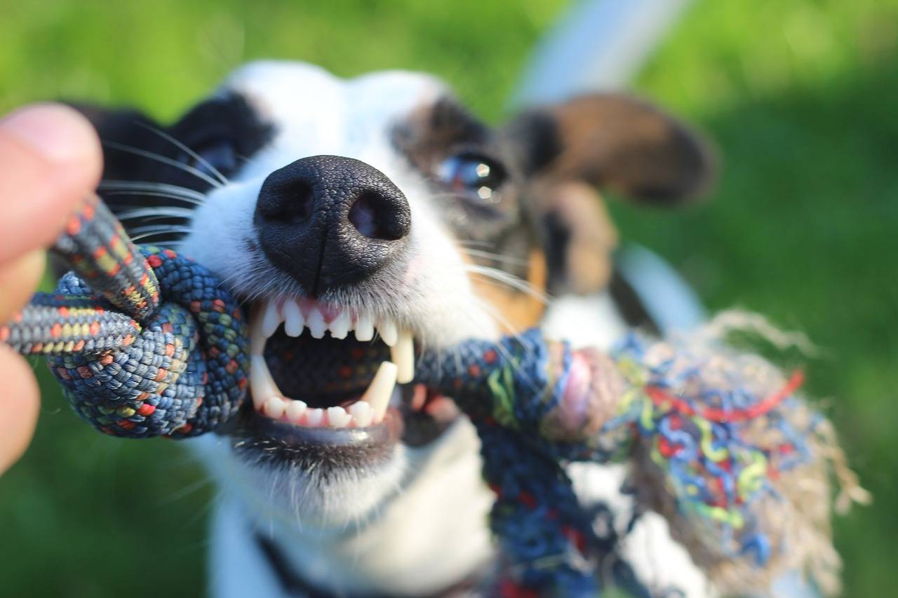 Gebitsverzorging Hond en Kat