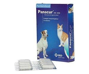 giardia hond behandeling panacur