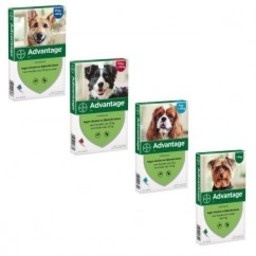 Advantage Nr. 400 vlooienmiddel (vanaf 25kg) hond Per verpakking