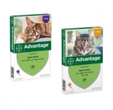 Advantage Advantage Kat