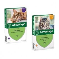 Advantage - Kat 40