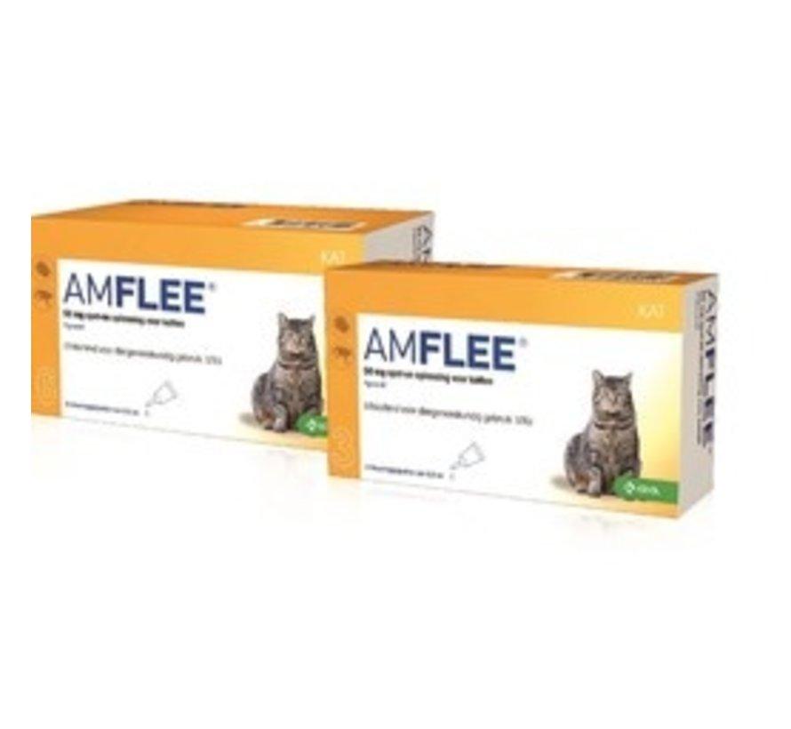 Amflee Kat