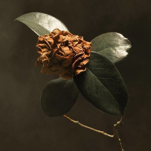 Records LLC St.Paul & The Broken Bones - Young Sick Camellia
