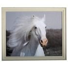 Schilderij met paard ca 60 x 50cm