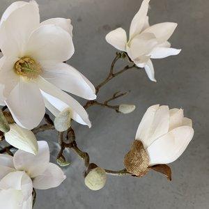 Magnolia tak 67cm