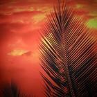 Doek zonsondergang palm ca 225 x 225cm