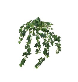 EUROPALMS EUROPALMS Ivy Bush, 50 cm
