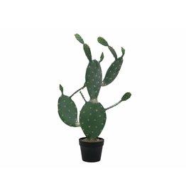 EUROPALMS EUROPALMS Nopal cactus, 76cm