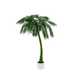 EUROPALMS EUROPALMS Palm, 1 trunk, 300cm, green