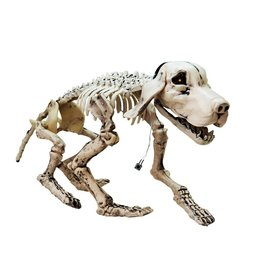 EUROPALMS EUROPALMS Halloween Skeleton Dog, 71x40x25cm