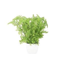 EUROPALMS EUROPALMS Forest fern in pot, 25 cm