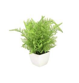 EUROPALMS EUROPALMS Forest fern in pot, 28 cm