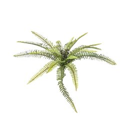 EUROPALMS EUROPALMS Forest fern, 40cm