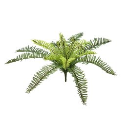 EUROPALMS EUROPALMS Forest fern, 30cm