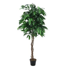 EUROPALMS EUROPALMS Jungle tree Mango, 180cm
