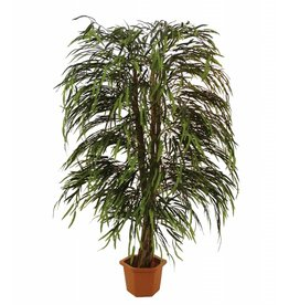 EUROPALMS EUROPALMS Willow tree multileave, 170cm