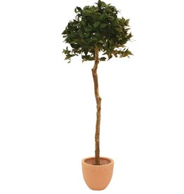 EUROPALMS EUROPALMS Laure Ball Tree, 180cm