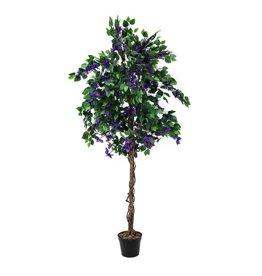 EUROPALMS EUROPALMS Bougainvillea, lavender, 150cm