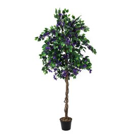 EUROPALMS EUROPALMS Bougainvillea, lavender, 180cm