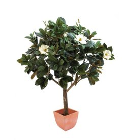 EUROPALMS EUROPALMS Magnolia Tree, 150cm