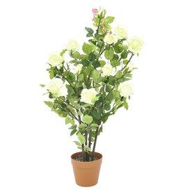 EUROPALMS EUROPALMS Rosebush, cream, 86cm