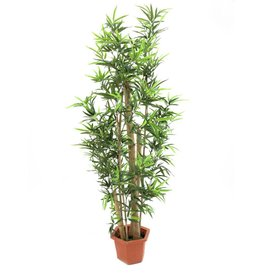 EUROPALMS EUROPALMS Bamboo tree with natural trunks, 225cm