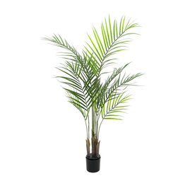 EUROPALMS EUROPALMS Areca Palm with big leaves, 125cm