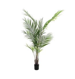 EUROPALMS EUROPALMS Areca Palm with big leaves, 165cm