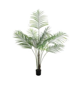 EUROPALMS EUROPALMS Areca Palm with big leaves, 185cm