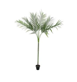 EUROPALMS EUROPALMS Areca Palm with big leaves, 180cm