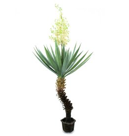 EUROPALMS EUROPALMS Yucca palm with blossoms, 222cm