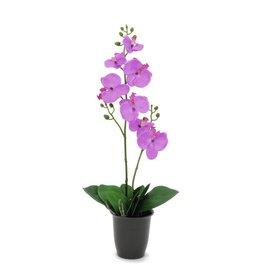 EUROPALMS EUROPALMS Orchid, purple, 57cm