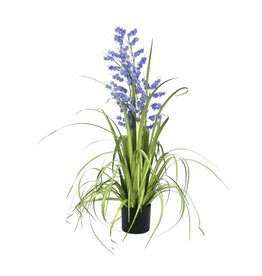 EUROPALMS EUROPALMS Bellflower, purple, 105cm