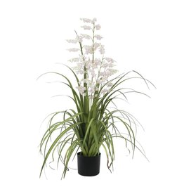 EUROPALMS EUROPALMS Bellflower, rose, 105cm
