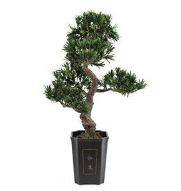 EUROPALMS EUROPALMS Bonsai podocarpus, 80cm